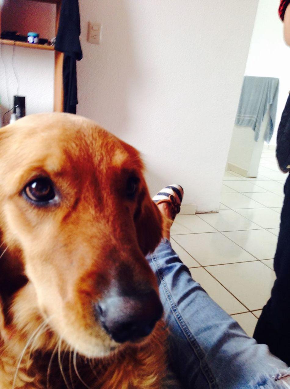 LaMejorPerra I Love My Dog Cute Pets Zaashila Lamejor