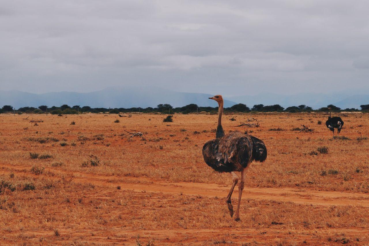 Tsavo East, Kenya. Landscape Nature Beauty In Nature Safari Animals Animal Wildlife Animal Themes Animal Animals In The Wild Africa Kenya Travel Destinations Safari Travel VSCO Adventure EyeEm Best Shots EyeEm Best Edits Tsavo