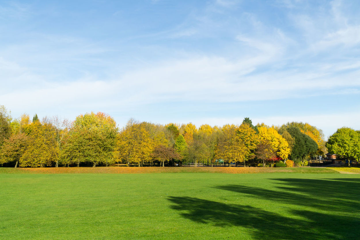 Autumn time in the countryside Autumn🍁🍁🍁 Day Grass Nature No People Outdoors Shadows & Lights Sky Sunny Day 🌞 Tree Tree Trunks Yellow