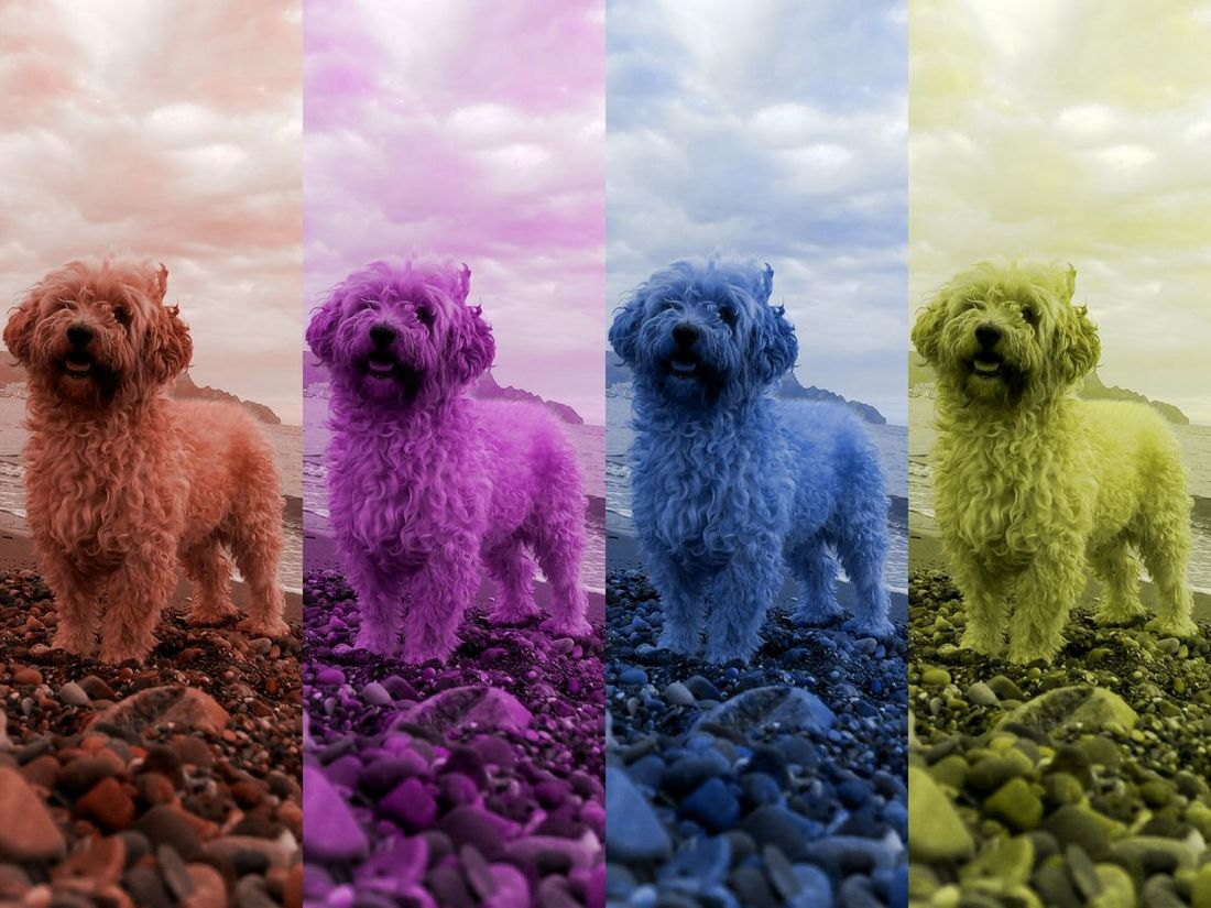 EyeEm Selects Dog Pets Multi Colored Animal Themes Outdoors Day Sky No People Mammal