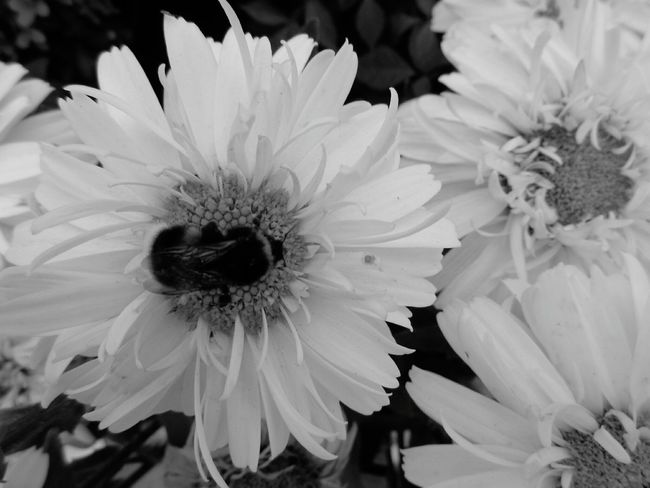 Love To Take Photos ❤ Black And White Bee And Flower Nature Enjoying Life