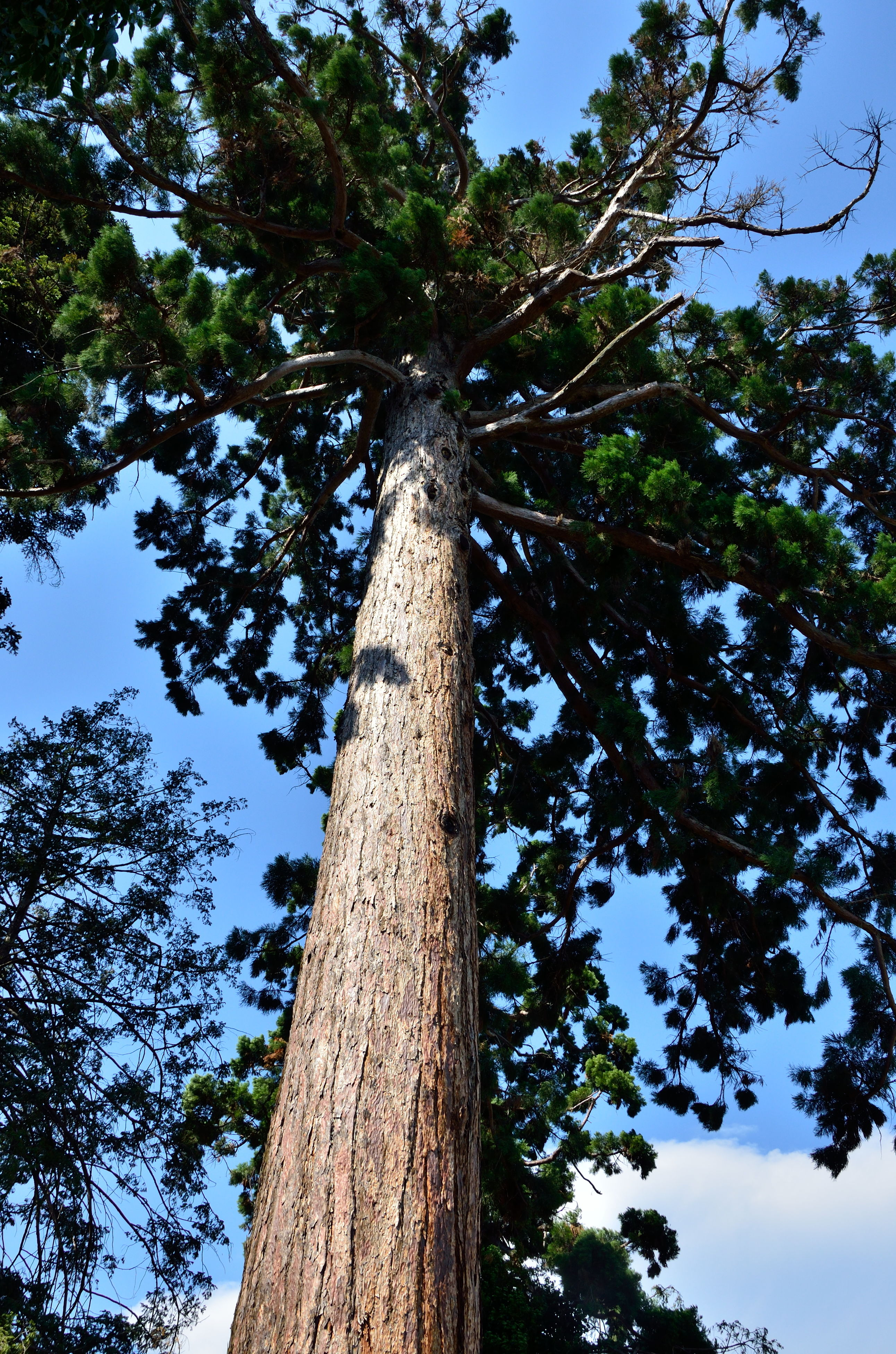 tree, low angle view, tree trunk, growth, branch, nature, clear sky, tranquility, sky, tall - high, wood - material, day, blue, outdoors, green color, beauty in nature, no people, tall, sunlight, forest