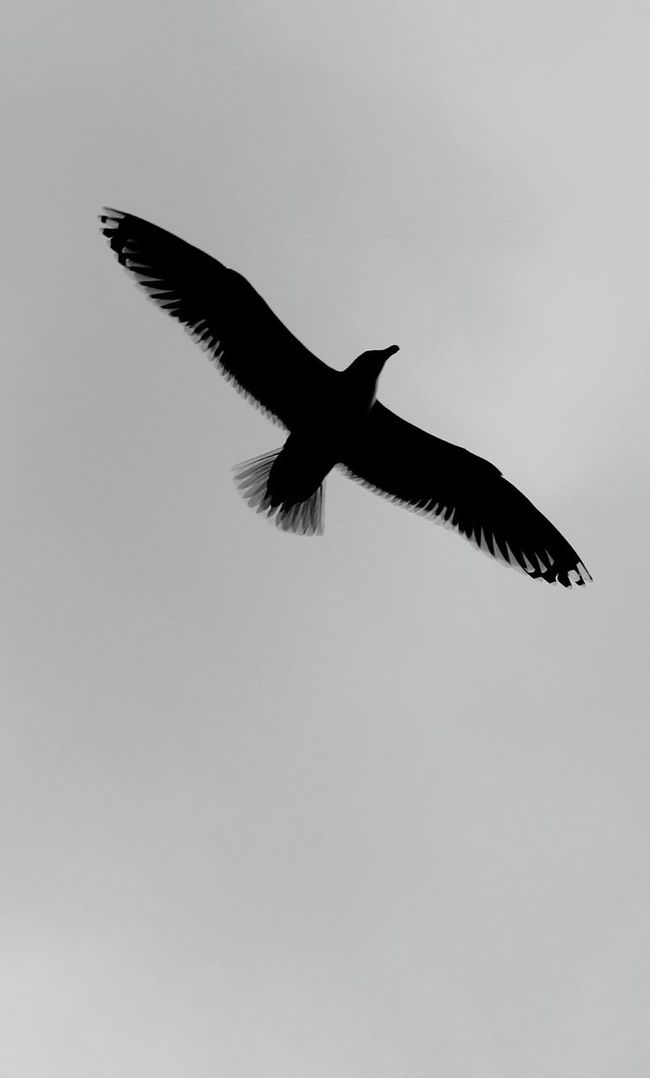 Segelflieger Life Is A Beach Birds Sea Lookingup Sky And Clouds Birds_collection On The Beach Clouds And Sky Blackandwhite Black And White