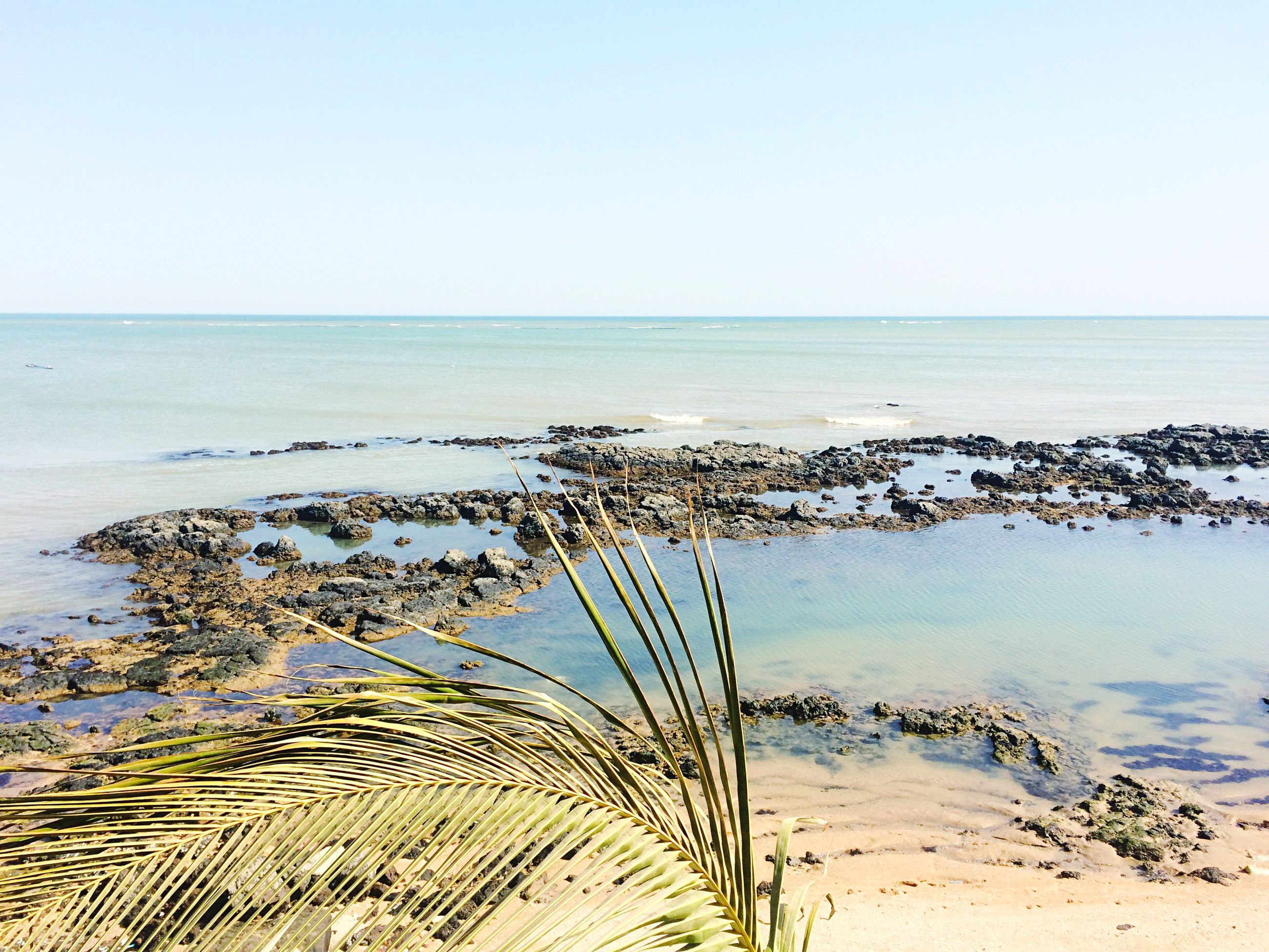 water, sea, horizon over water, clear sky, tranquility, tranquil scene, beach, scenics, beauty in nature, nature, shore, sand, copy space, idyllic, growth, plant, sky, palm tree, remote, outdoors