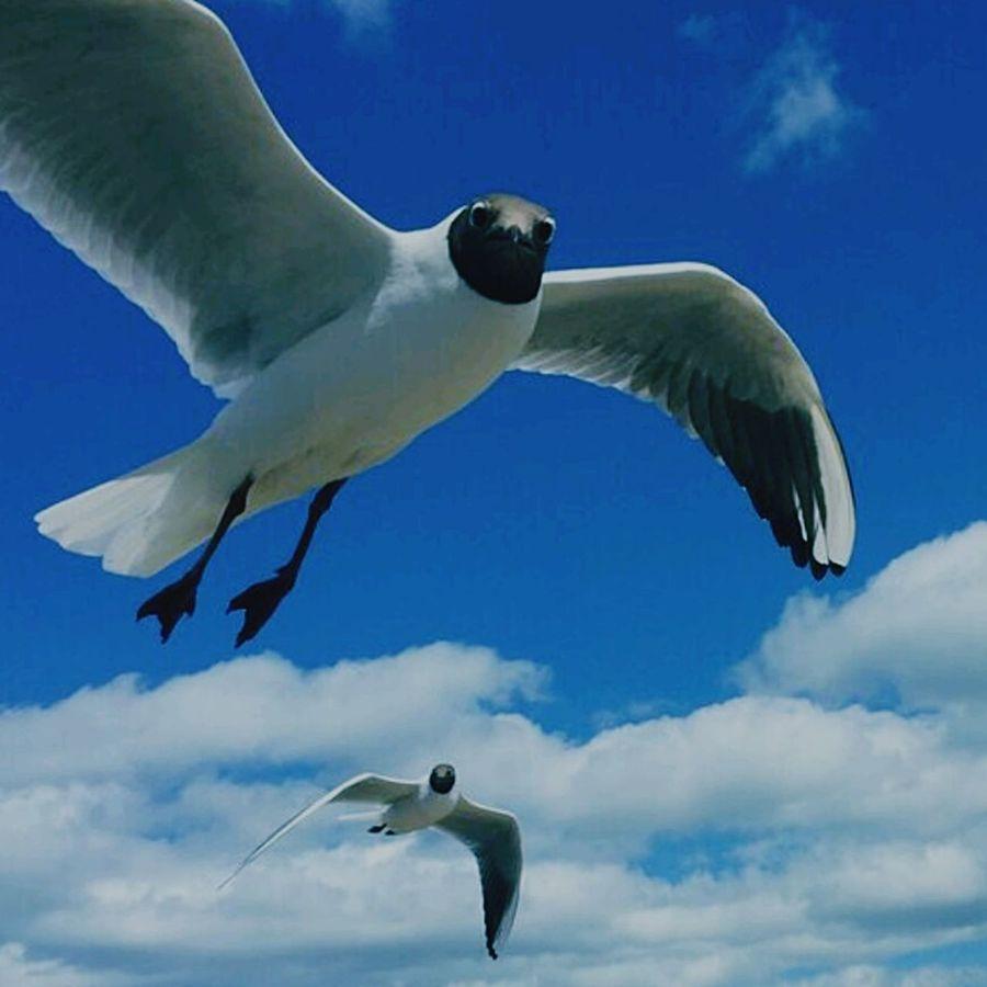 Are you looking at me?! Funny Funny Faces Birds Bird Photography Taking Photos Hello World Birdlife Flight Nature Followme