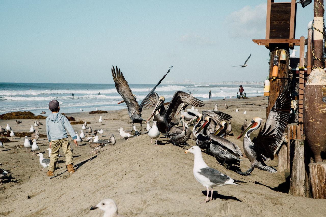 Beautiful stock photos of vogel, Animal Themes, Animal Wildlife, Animals In The Wild, Beach