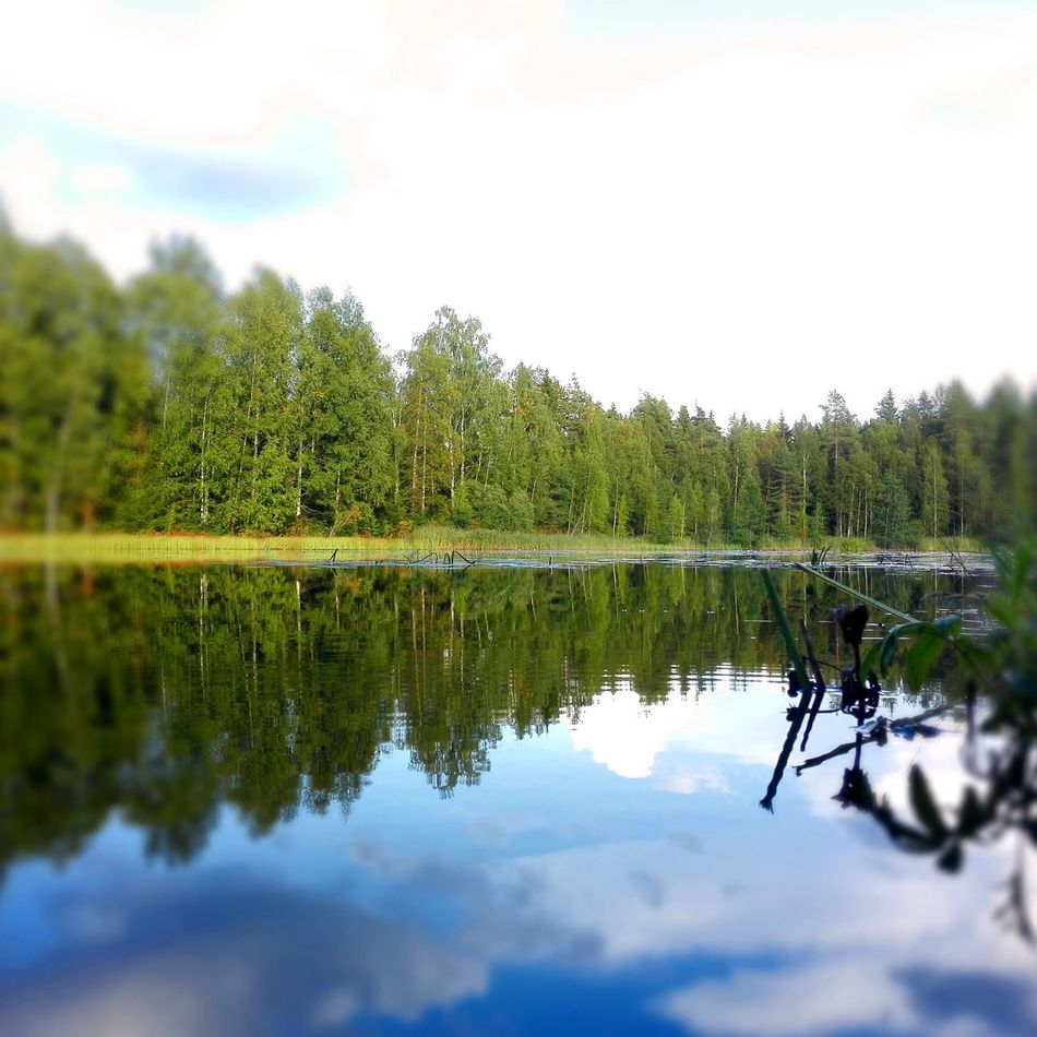 Reflection Tree Water Reflection Tree Water Nature Sky Lake Outdoors No People Day Scenics Reflection Lake Beauty In Nature Streetphotography Green Color Sweet Moments Silence Silent Moment Finland Finlandia Finland Summer Beauty In Nature Nature