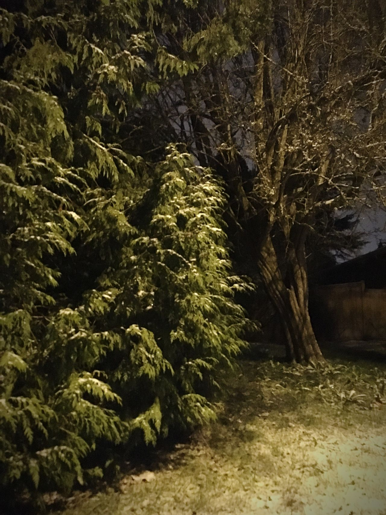 Nature No People Outdoors Tree Illuminated Treethugger Naturerox Winter