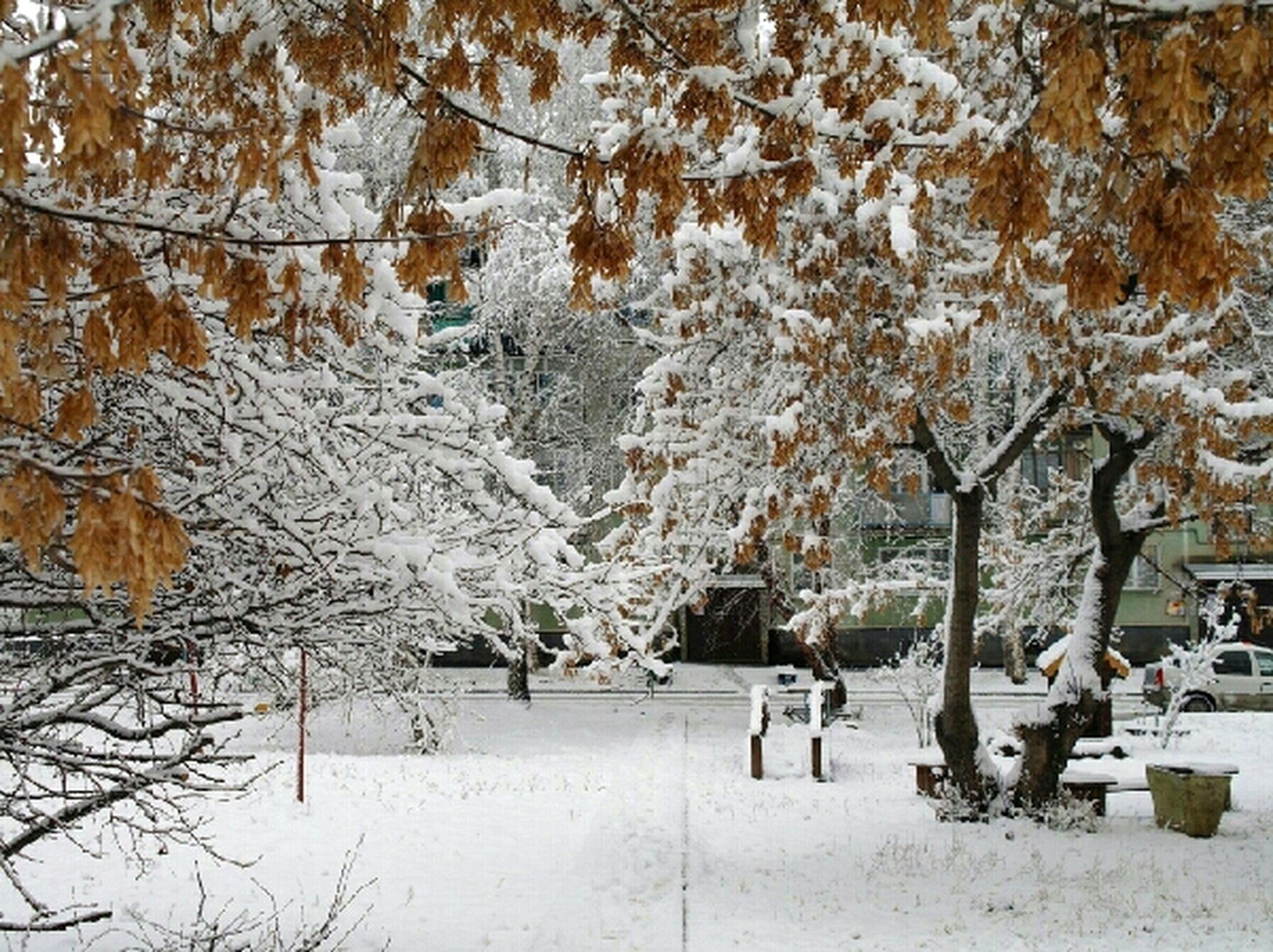 Вот так неожиданно у нас наступила зима. Nature Snow My City Street