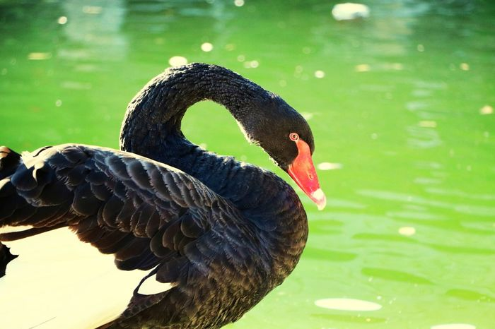EyeEm Selects One Animal Bird Animal Wildlife Animals In The Wild Animal Themes No People Close-up Outdoors Nature Water Day