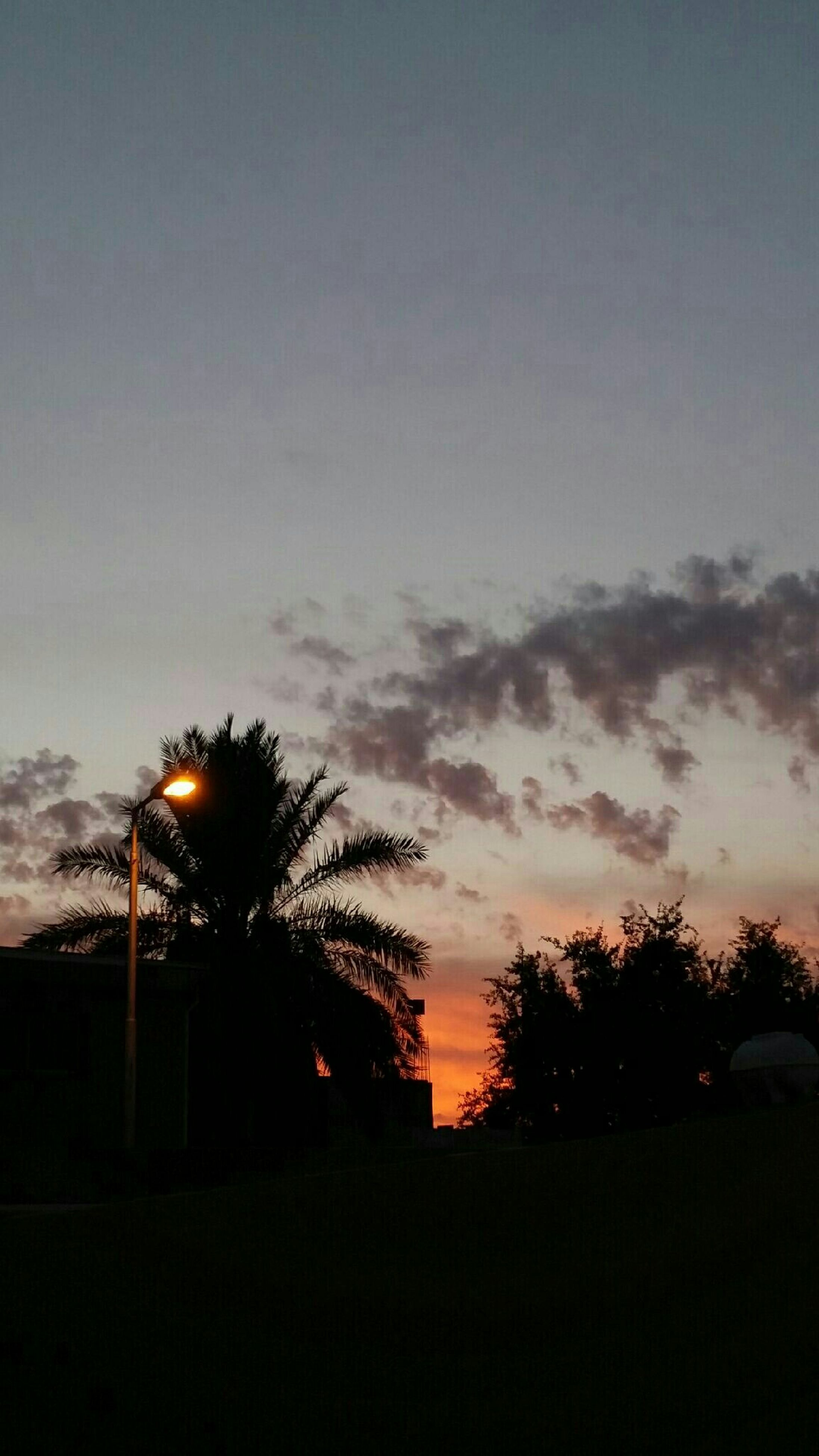 silhouette, sunset, sky, tree, low angle view, beauty in nature, tranquility, dusk, nature, scenics, dark, cloud - sky, tranquil scene, built structure, growth, outdoors, copy space, outline, architecture, orange color