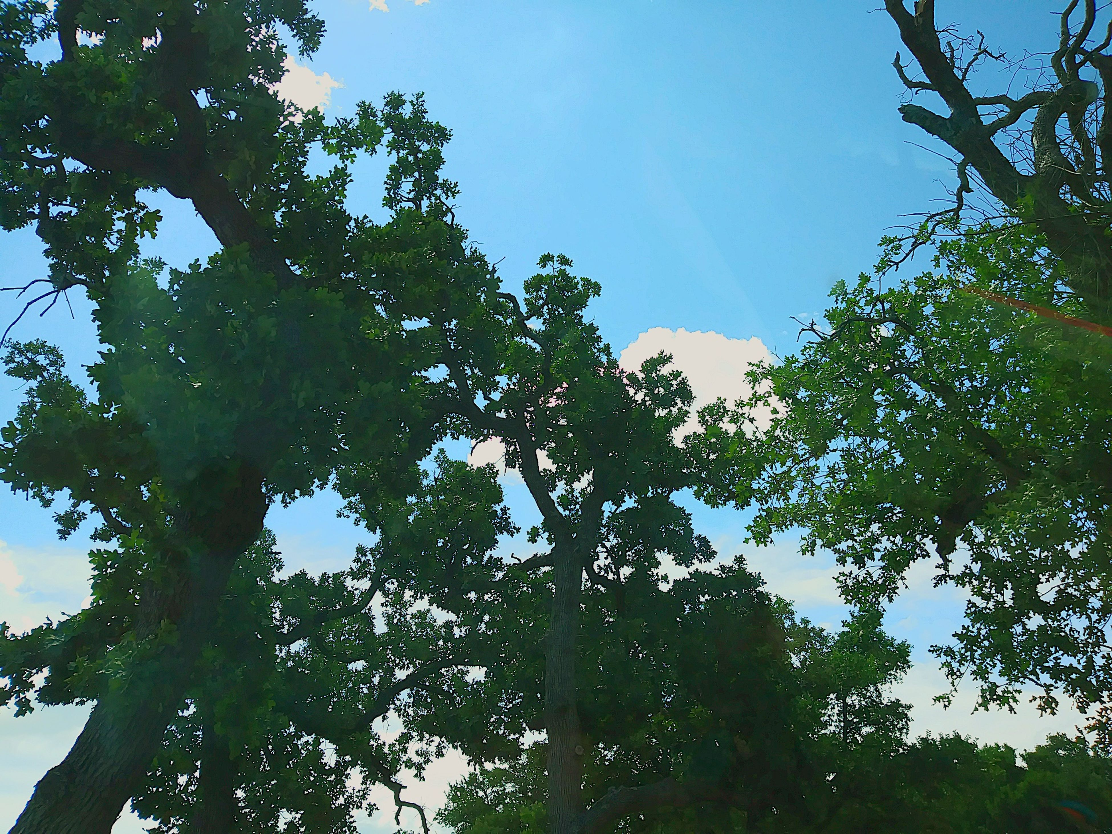 tree, low angle view, nature, day, beauty in nature, blue sky, no people, clear sky, forest, outdoors, sky