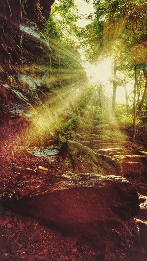 Lehigh Gorge State Park, Glen Onoko on The Falls Trail Creative Light And Shadow Pennsylvania Nature Nature Photography TreePorn Beautiful