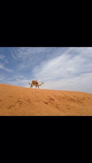 Hollidays Marroco