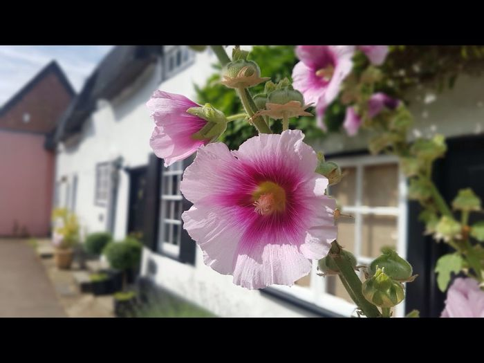 English cottage 5235729