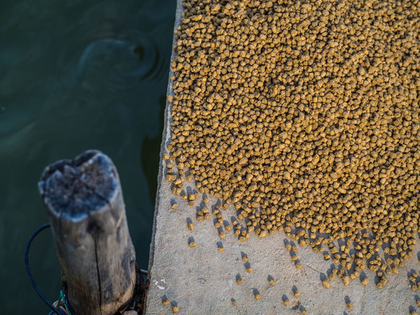 Animal Feed Animal Feeder Animal Feeding Close-up Day Feeding  Feeding Fish Fish Food Food High Angle View Nature No People Outdoors Water