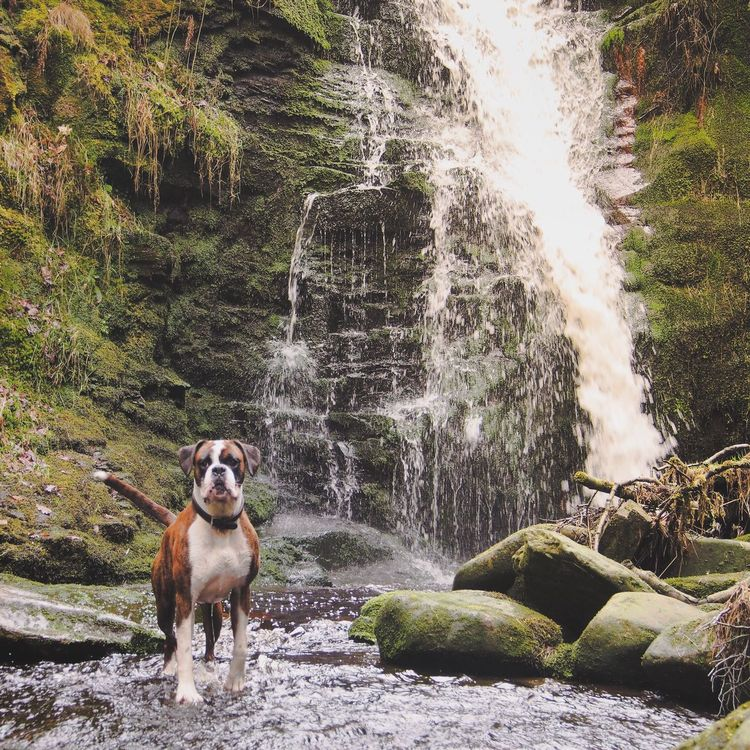 Is here ok? Yes perfect do not move.. 🐶 Water Animal Themes Domestic Animals Waterfall Nature Pets Beauty In Nature EyeEm Best Shots Eye4photography  EyeEm Gallery Mansbestfriend Lancashire Rivington Rivington Country Park