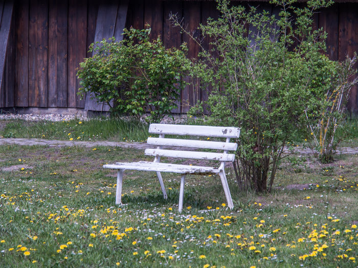 old bench Nature Restoration Beauty In Nature Bench Old Bench Day Flower Garden Grass Growth Leaf Nature No People Old Colors Outdoors Plant Spring Flowers Tree White Color White Old Bench Wood - Material