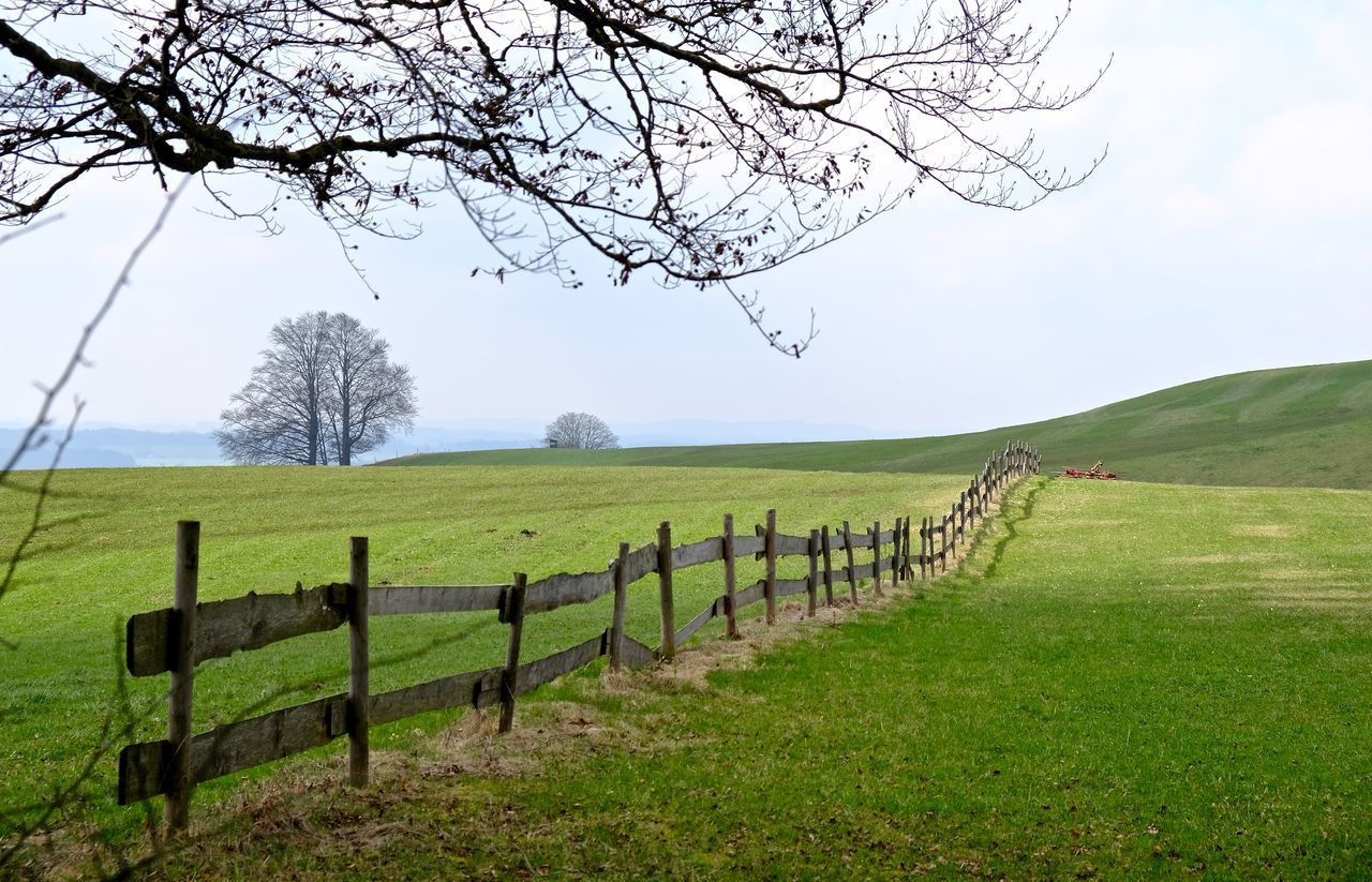 Agriculture Bare Tree Clear Sky Day Fence Field Grass Landscape Outdoors Rural Scene Tree