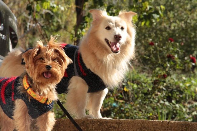 Star and Whiskey's day out. Dogs Pets Daily Dog Love Cute Pets #dog