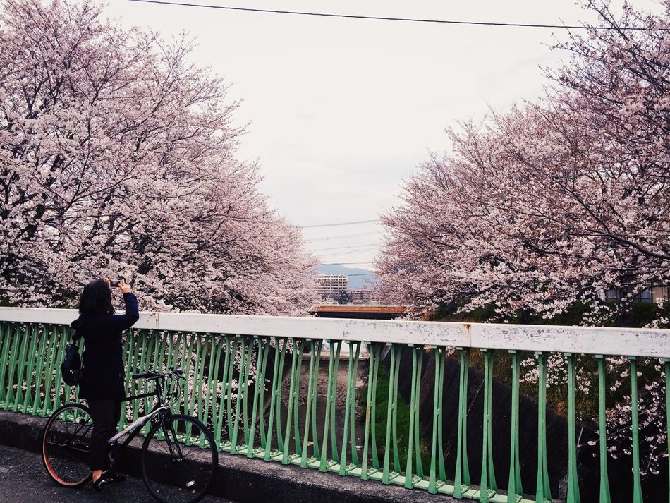 Cherry Blossoms Tree Real People One Person Nature Day Outdoors Eyem Best Shots VSCO Mobilephotography