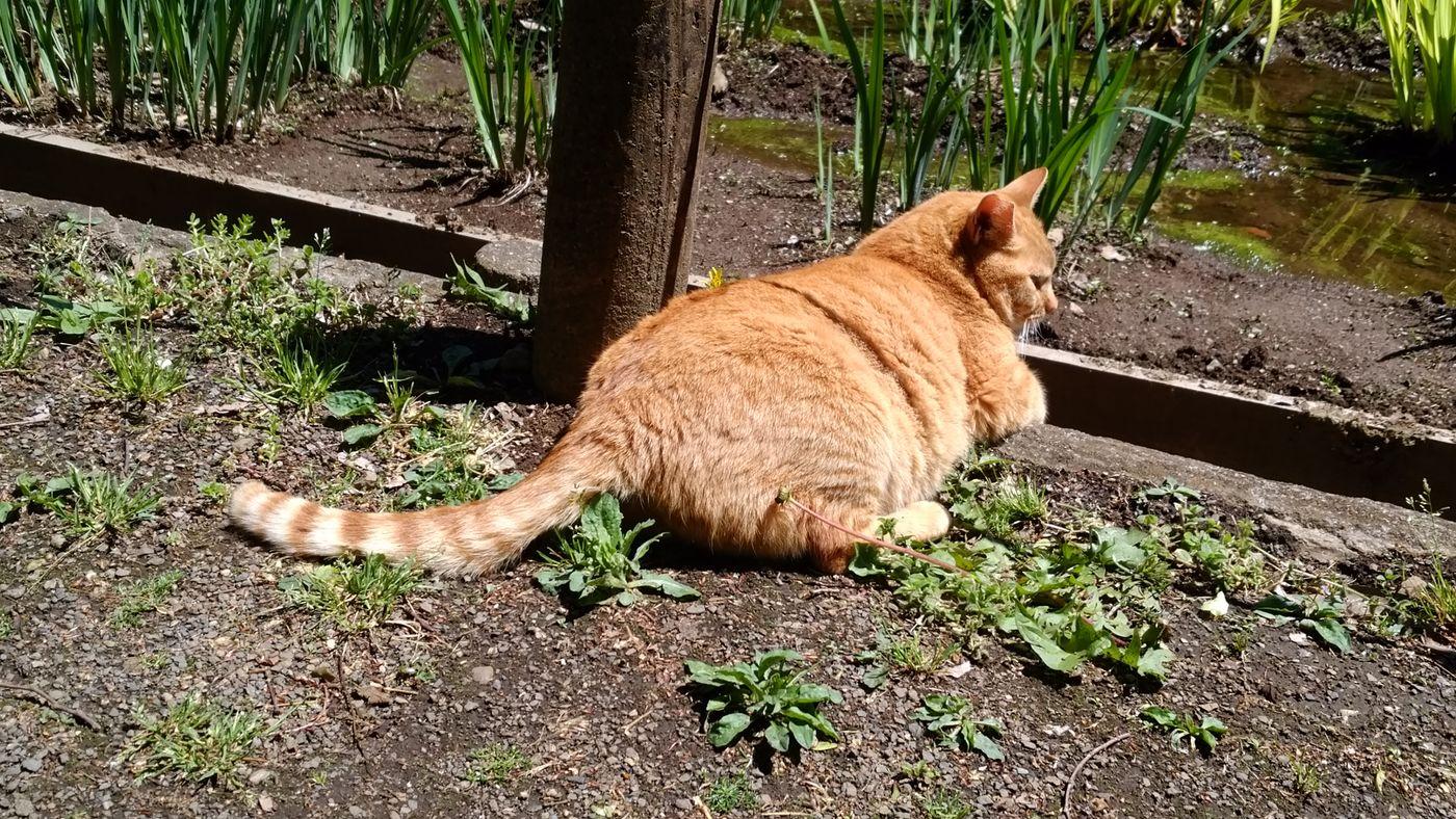 Love Cat ♥ 野良猫 自由猫