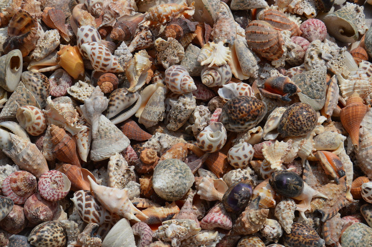 Backgrounds Beach Close-up Day Full Frame Large Group Of Objects Nature No People Pebble Shells