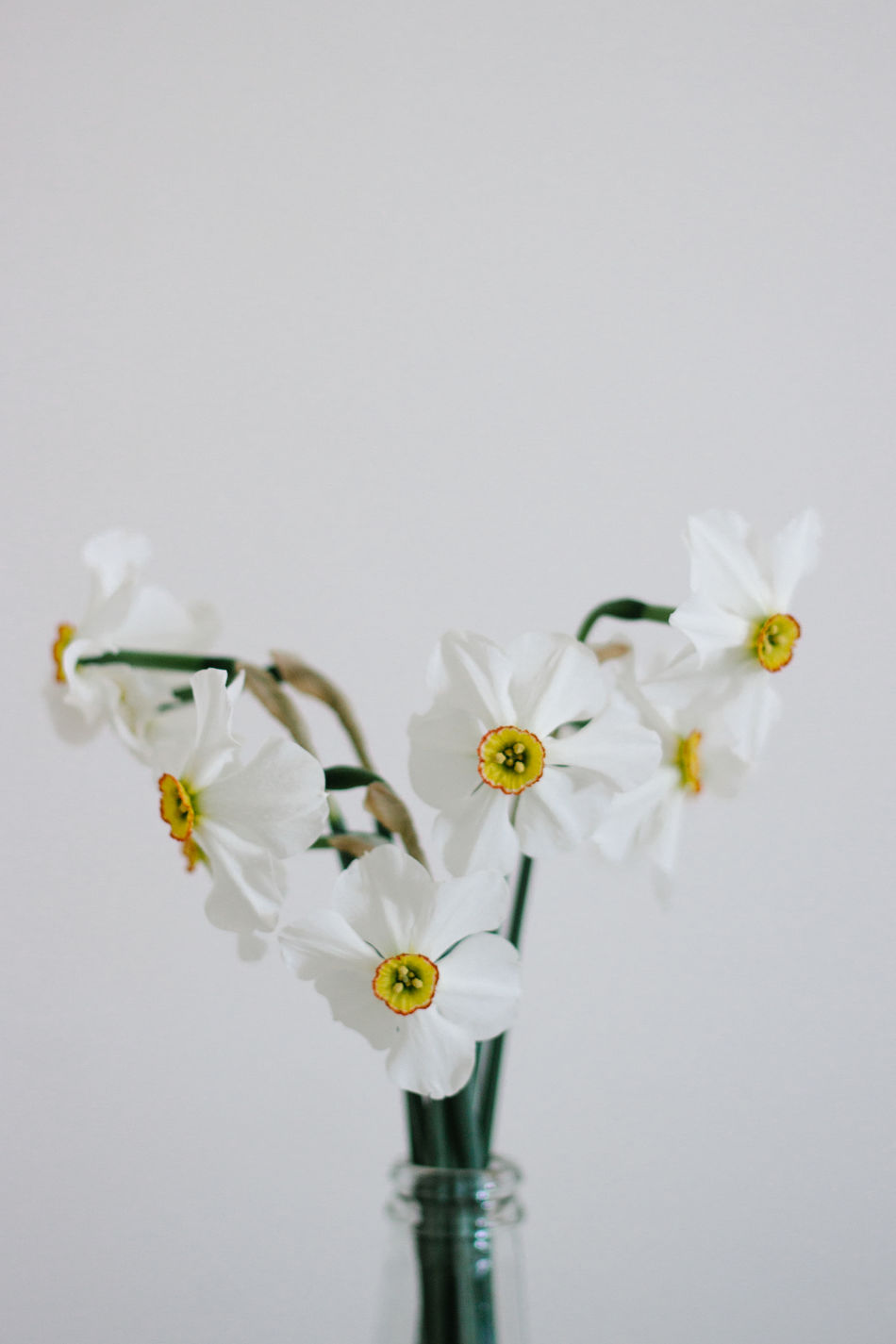 Close up of narcissus flower in glass bottle in minimalistic style Beauty In Nature Close-up Day Flower Flower Head Fragility Freshness Glass Growth Indoors  Minimalistic Sty Narcissus Nature No People People Petal Plant Springtime Still Life White Background White Color