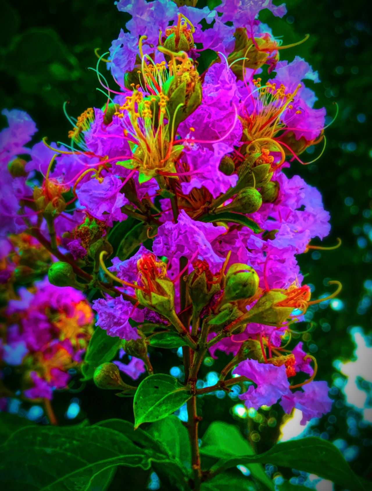 Purple Flowers of late Spring and Green Leaves. Close-up and Vibrant Colors