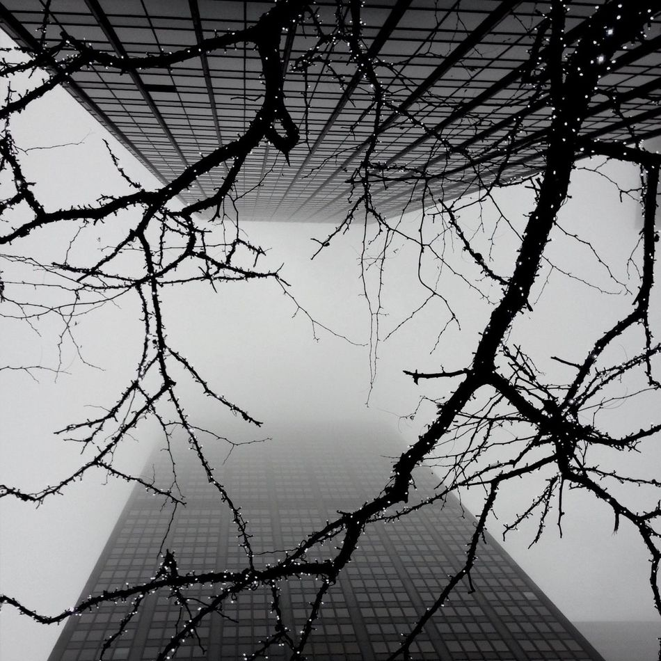 Beautiful stock photos of fairy, Architecture, Bare Tree, Branch, Building Exterior