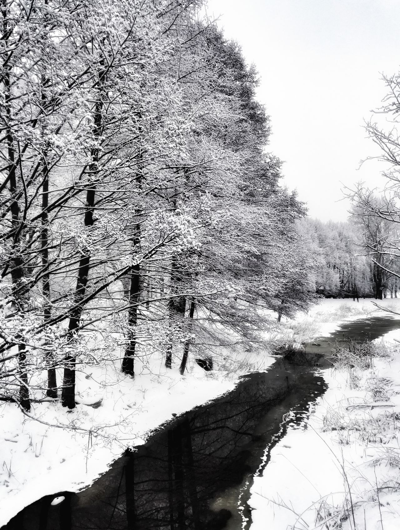 Tree City Weather Hello World Snow Enjoying Life Black And White Winter Tranquility Cold Temperature Day Cityscape Water Nature Standing Water Water_collection