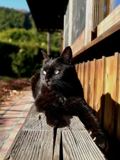 Black Cat Japanese Traditional House Outdoors Cat Cute Love Cat No People Japan Pets One Animal Wood - Material Mammal Animal Themes Day Domestic Cat
