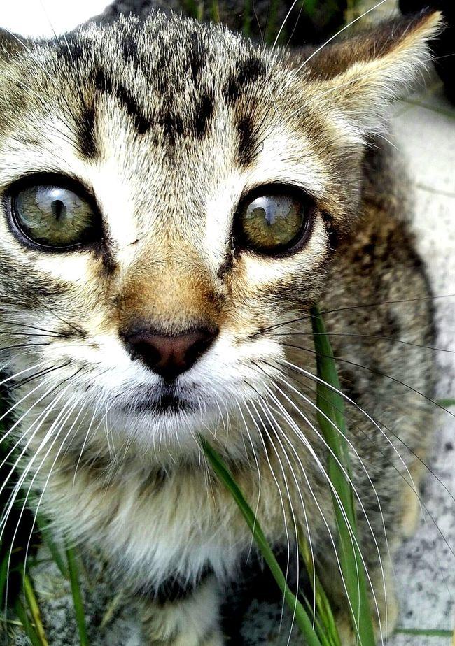 """""""Luka"""" Cat Leon Majin Buu Vegetta Eyeshadow"""