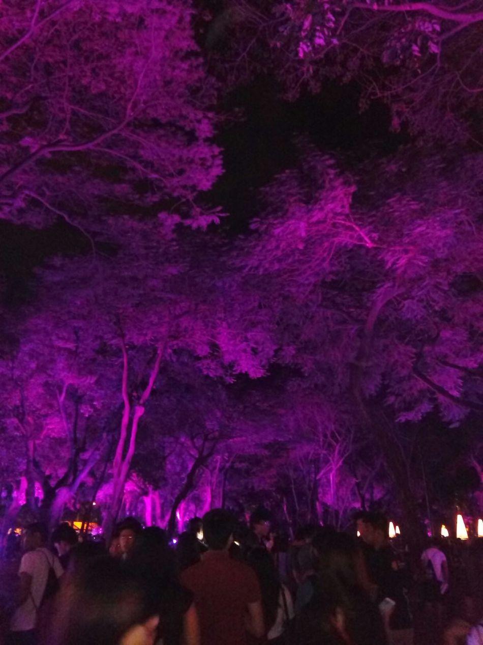 Trees Tree With Lights Paskuhan2015 UST Nightphotography