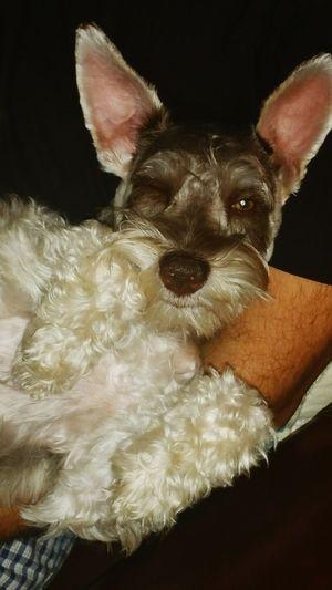 Dogslife Dog Love Dogs Of EyeEm Veterinary Veterinarian