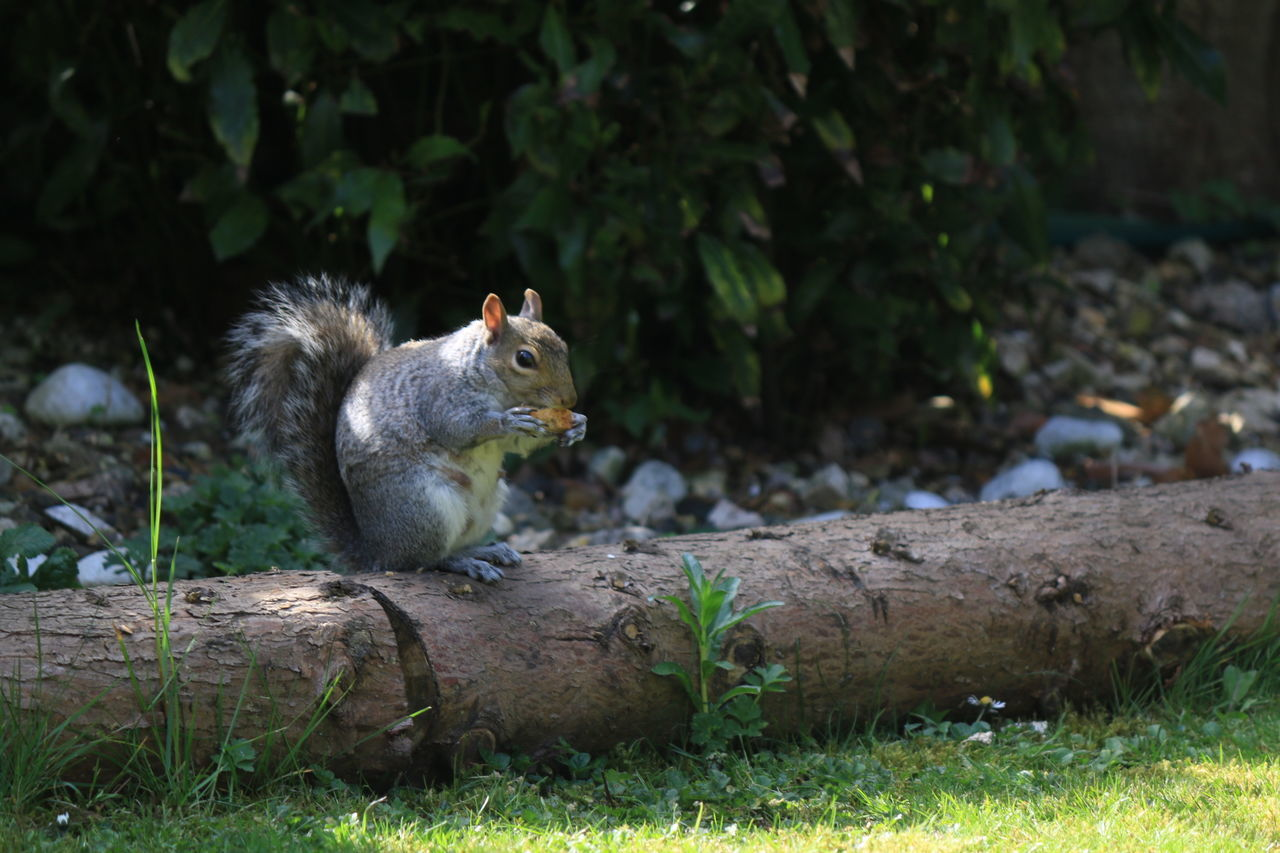 Squirrel Eating On Tree Trunk