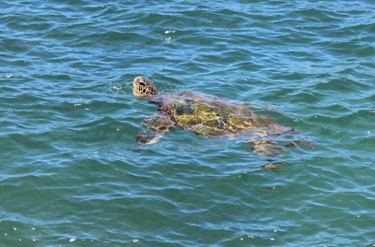 Animal Themes Animal Wildlife Animals In The Wild One Animal Sea Sea Turtle Swimming Water