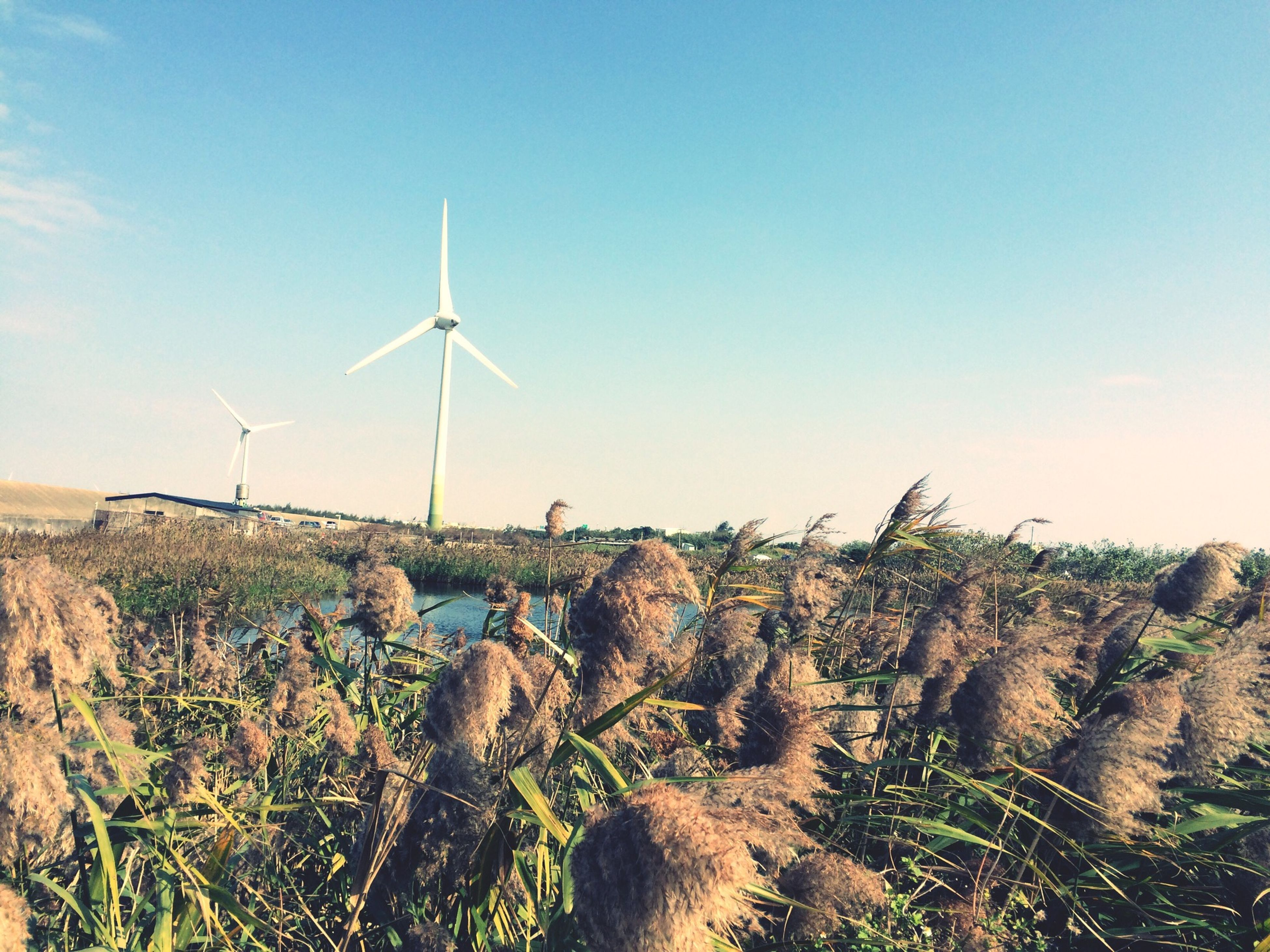 wind power, wind turbine, windmill, alternative energy, environmental conservation, landscape, renewable energy, fuel and power generation, field, rural scene, clear sky, tranquil scene, tranquility, traditional windmill, copy space, nature, horizon over land, technology, grass, sky