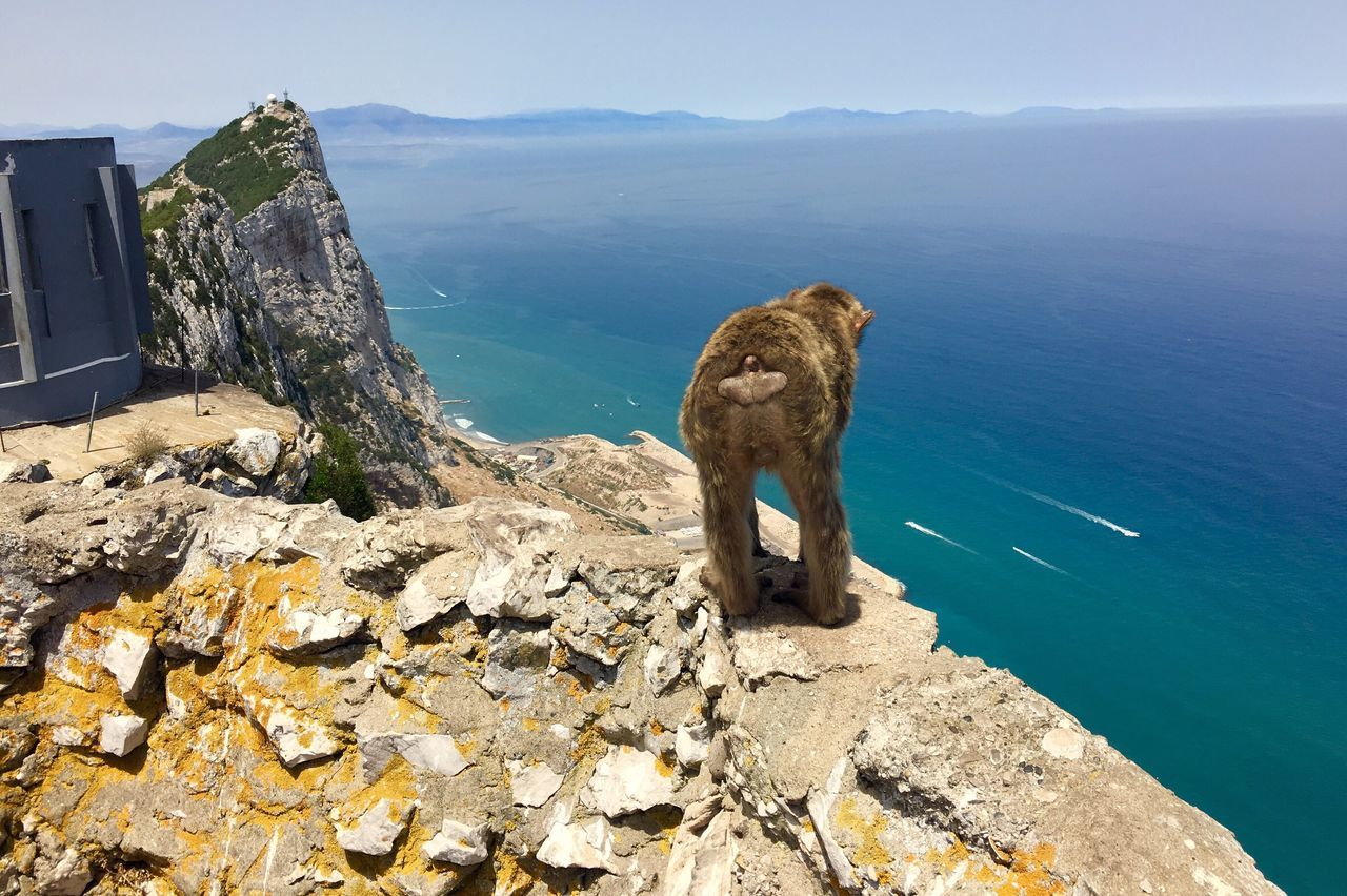 The Great Outdoors - 2017 EyeEm Awards Water Rock - Object Monkey Nature Sea Scenics SPAIN Great Britain Gibraltar Mountain Animals In The Wild One Animal Day Summer Holiday Verano Mono Mediterranean  Street Of Gibraltar