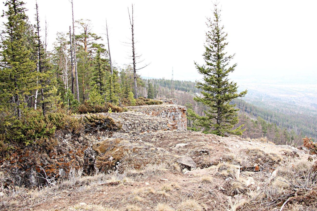 Сопка любви Природа Лес скалы
