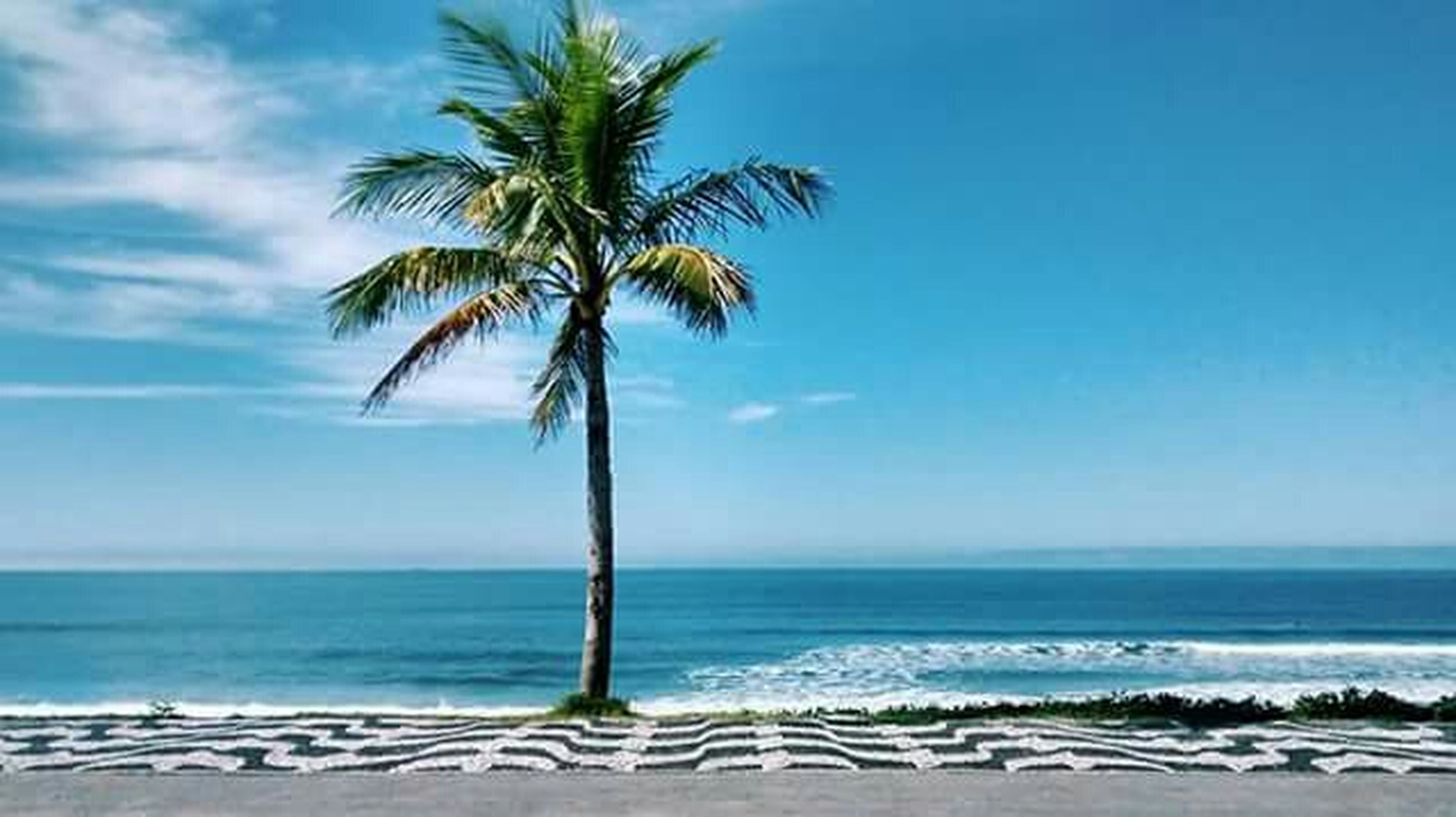sea, horizon over water, palm tree, beach, water, tree, tranquility, tranquil scene, scenics, blue, beauty in nature, sky, shore, nature, tree trunk, sand, idyllic, vacations, tropical climate, growth
