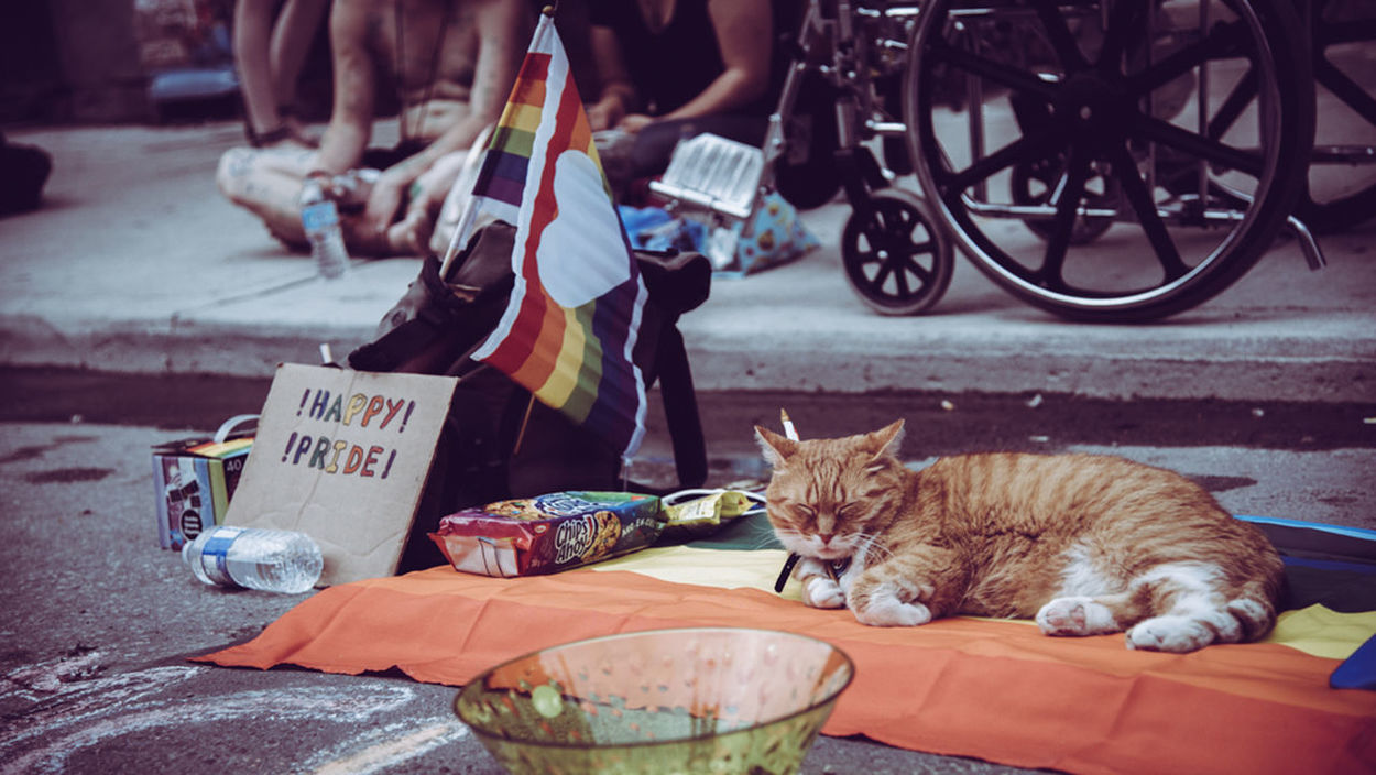 Cat City City Life Gay Photographer Lgbt Lgbtq Photograph Pride 2017 Queer Photog Relaxing Street Photography Urban Toronto PrideTO EyeEmNewHere