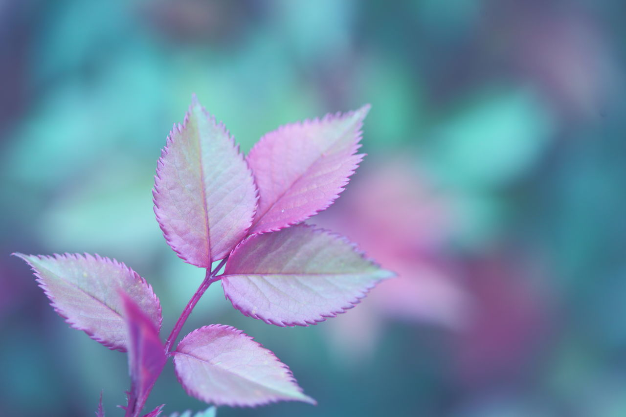 Beautiful Beauty In Nature Close-up Color Day Depth Of Field Freshness Growth Leaf Leaves Life Nature New No People Outdoors Pastel Pink Pink Color Plant Soft Colors  Soft Focus Spring Springtime