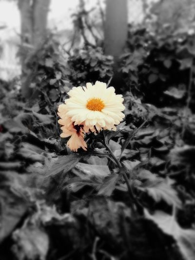 Flowr photo by me