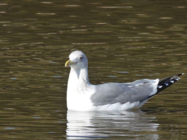 カモメ Tadda Community Bird