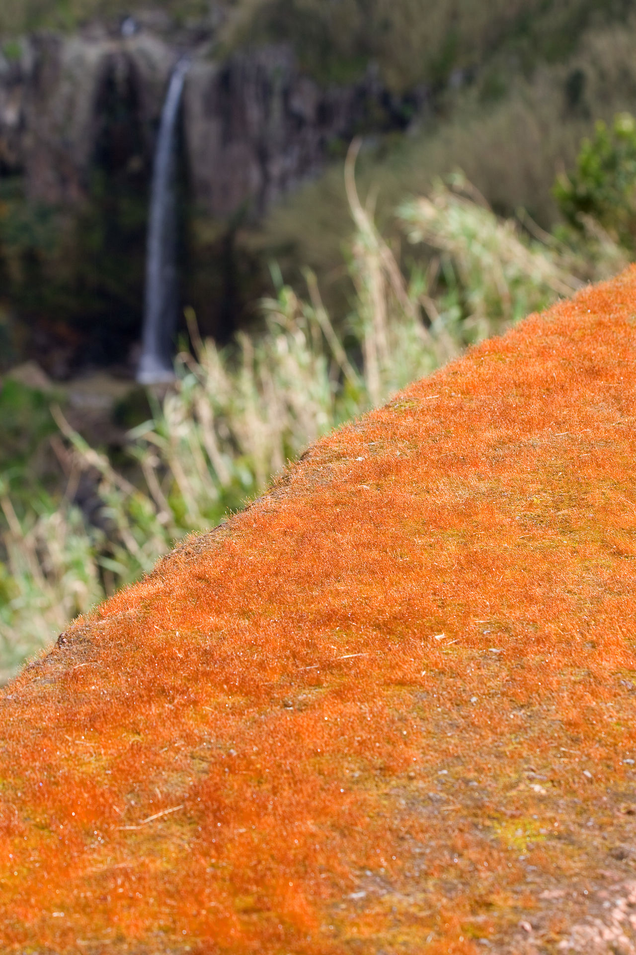 Azores Açores Beauty In Nature Colorful Landscape Nature Outdoors Portugal Waterfall