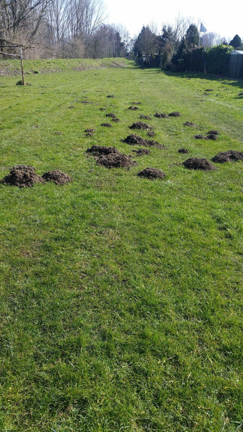 Beauty In Nature Field Grass Grass Area Grassland Green Landscape Maulwurf Maulwurfhügel Maulwurfshügel Mole Nature Outdoors Urban Spring Fever 2016 EyeEm Awards