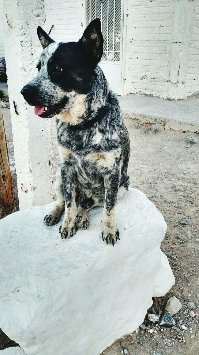 The Guardian My Loyal Companion <3