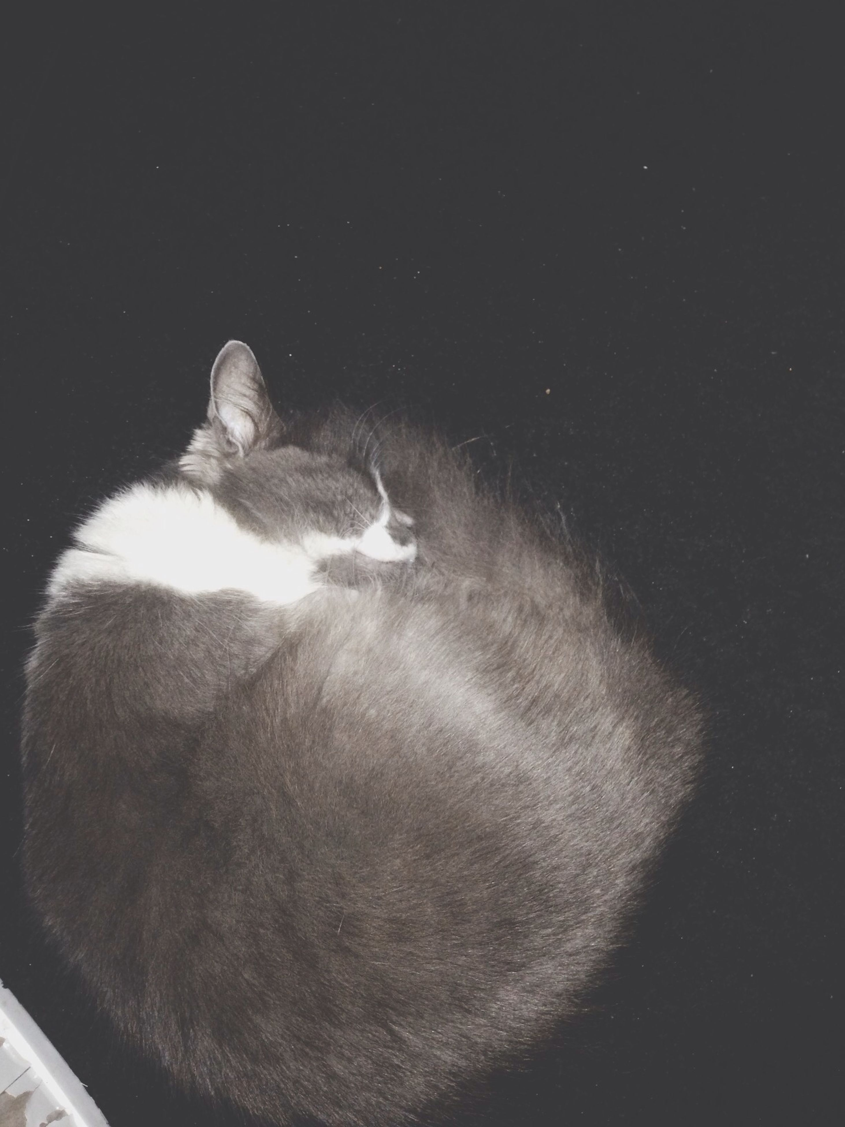 animal themes, one animal, mammal, domestic animals, wildlife, animals in the wild, pets, domestic cat, two animals, cat, relaxation, indoors, sleeping, zoology, young animal, feline, side view, no people, bird, vertebrate