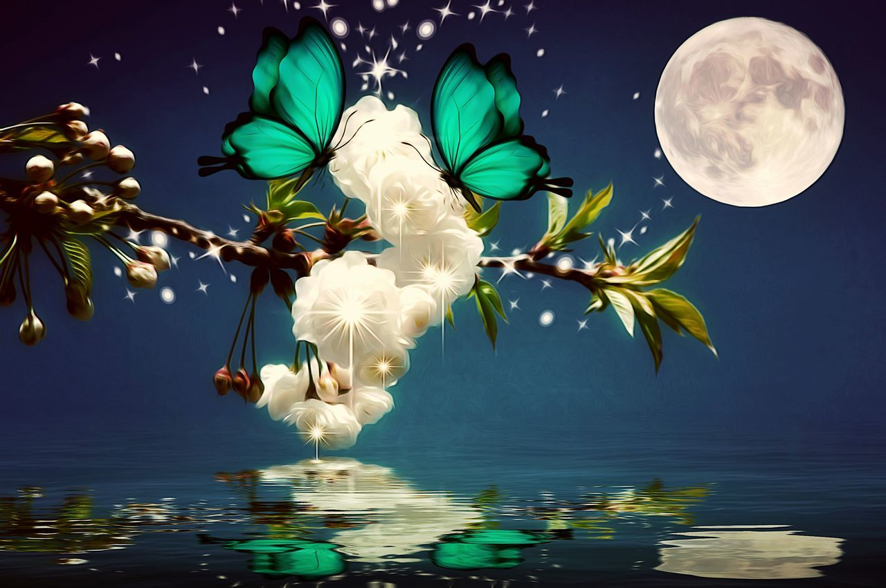 Moon No People Leaf Sky Water Night Nature Tree Moon Lit Butterfly Edit Junki Blossoming Tree Artistic Expression Freshness Cut And Paste